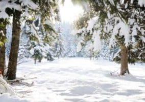 depositphotos_10420393-stock-photo-winter-beautiful-scene-tree-and